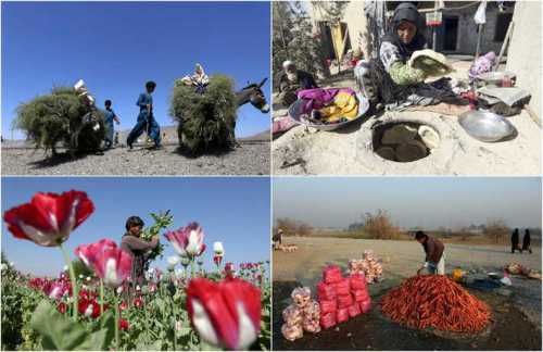виза в афганистан для россиян: как поехать на работу в эту страну в 2019 году