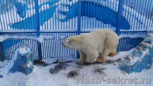 медведь устроил в лесу зажигательные танцы и покорил интернет